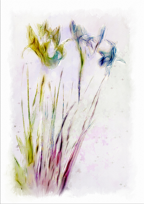 Digital Art Digital Art - Dancing Irises by Jill Balsam