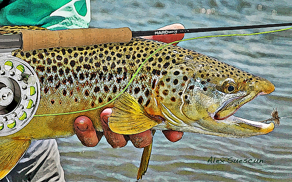 Trout Painting - Dry Fly Brown by Alex Suescun