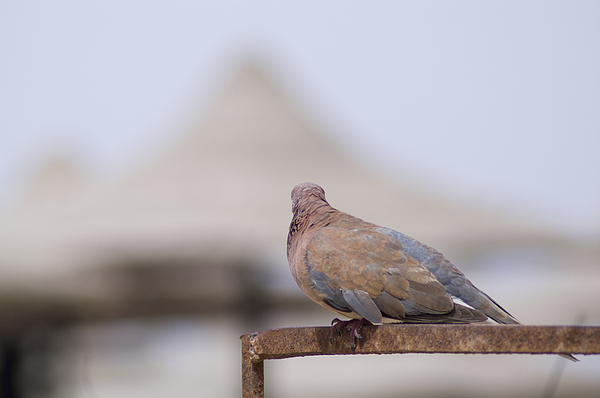 Bird Photograph - Egypt by Be Lucca
