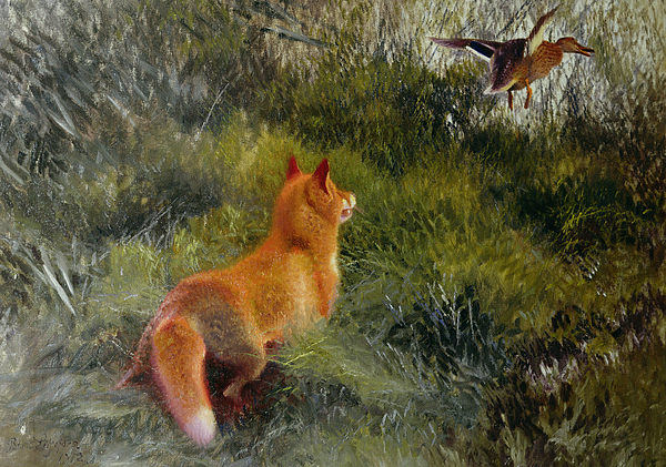Eluding The Fox Painting - Eluding The Fox by Bruno Andreas Liljefors