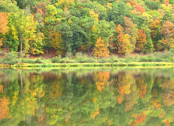 Fall Forest Reflection Photograph