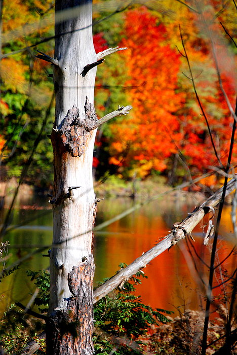 Fall Photograph - Fall In Fremont by Emily Stauring