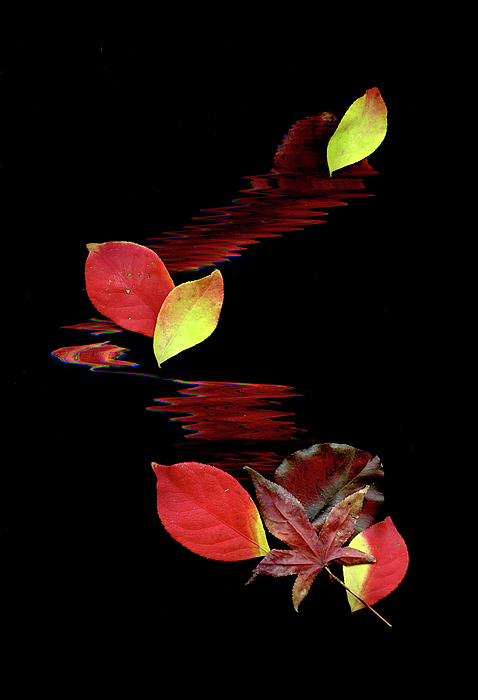 Abstract Art Photograph - Falling Leaves by Gerlinde Keating - Keating Associates Inc