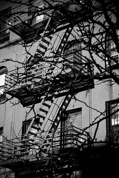 New York City Photograph - Fire Escape Tree by Darren Martin