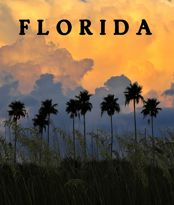 Fine Art Photography Photograph - Florida Poster by David Lee Thompson