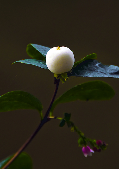Botanic Photograph - Flower Ball by Svetlana Sewell