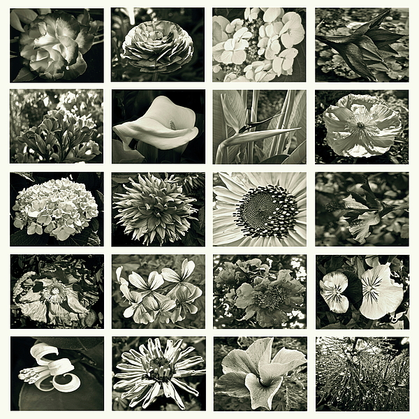 Flower Photograph - Flower Favorites Bw by Gwyn Newcombe