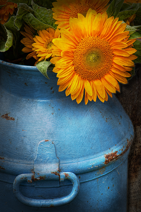 Sunflowers Photograph - Flower - Sunflower - Little Blue Sunshine  by Mike Savad