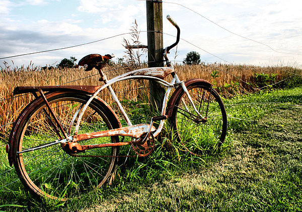 Bike Photograph - Forgotten Bicycle by Doug Hockman Photography