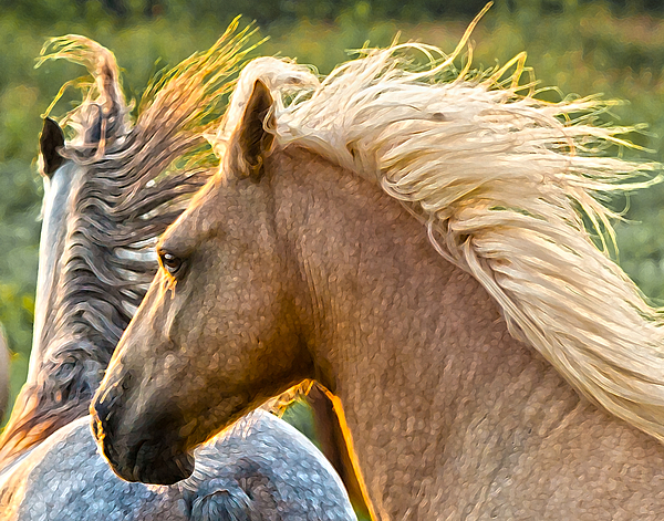 Horse Photograph - Free Spirits by Ron  McGinnis