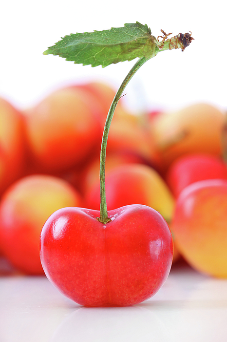 Agriculture Photograph - Fresh Ripe Cherries Isolated On White by Sandra Cunningham