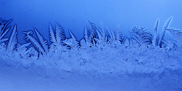 Frost Photograph - Frost Forest by Thomas R Fletcher
