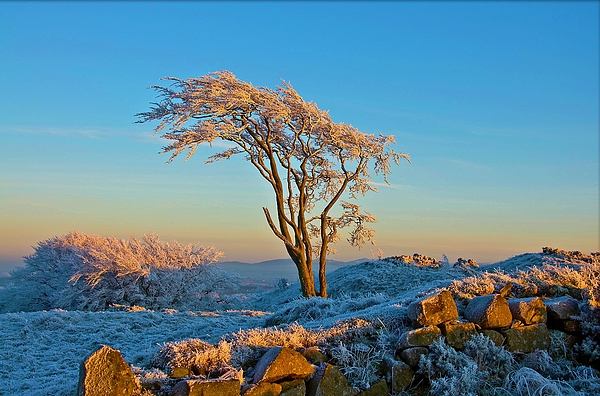 Tree Photograph - Frosted Tree by Mark Denham