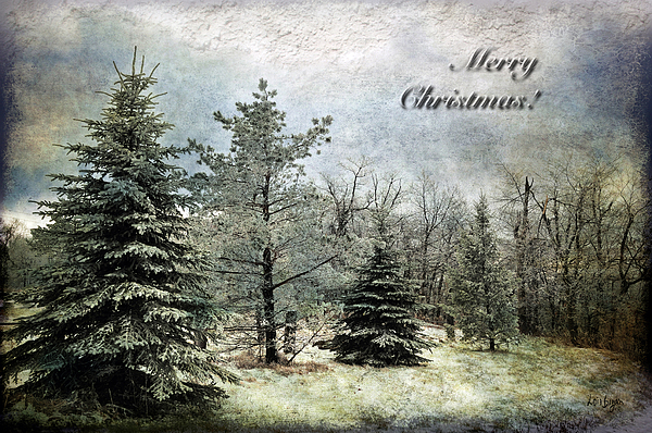 Christmas Photograph - Frosty Christmas Card by Lois Bryan