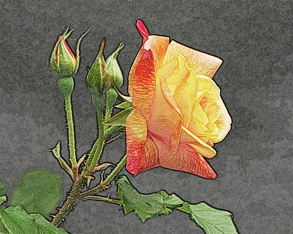 Yellow Rose Photograph - Glenns Rose 2 by Michael Peychich