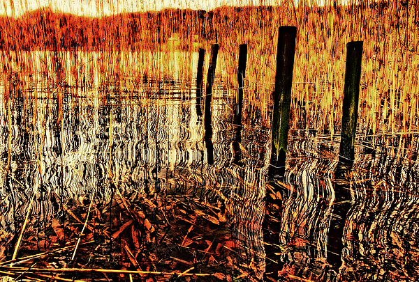 Jetty Photograph - Golden Decay by Meirion Matthias