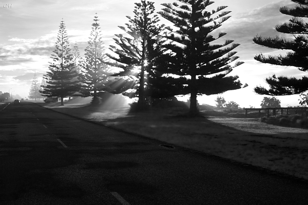 Ohope Photograph - Good Morning by Graham Hughes