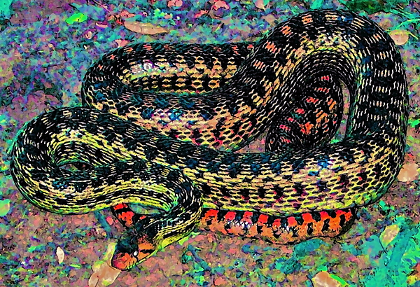 Nature Photograph - Gopher Snake by Pamela Cooper