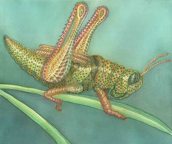 Watercolor Print Painting - Grasshopper by Anne Havard
