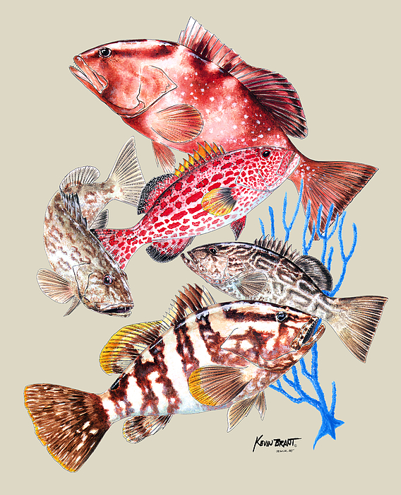 Grouper Painting - Grouper Montage by Kevin Brant