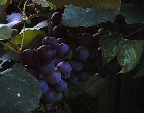 Grapes Photograph - Grrrrapes by Ross Powell