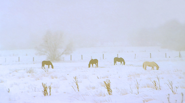 Horses Grazing In A Field Of Snow And Fog Photograph