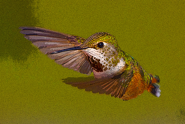 Abstract Photograph - Hummingbird In Flight- Abstract by Tim Grams