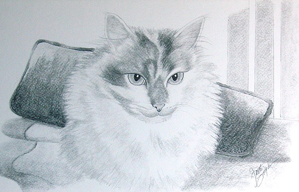 Cat Drawing - Idget by Joette Snyder