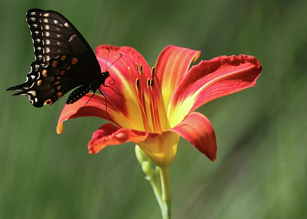 Butterfly Photograph - Inviting by Sabrina L Ryan