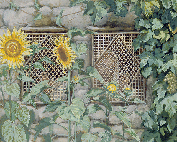 Jesus Looking Through A Lattice With Sunflowers Painting - Jesus Looking Through A Lattice With Sunflowers by Tissot