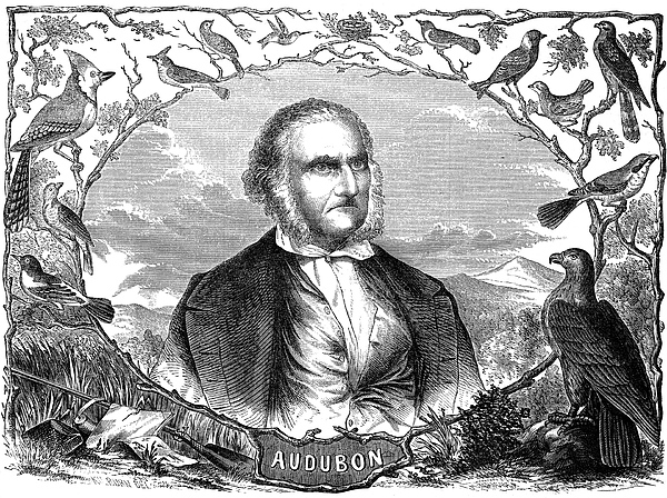 19th Century Photograph - John James Audubon by Granger