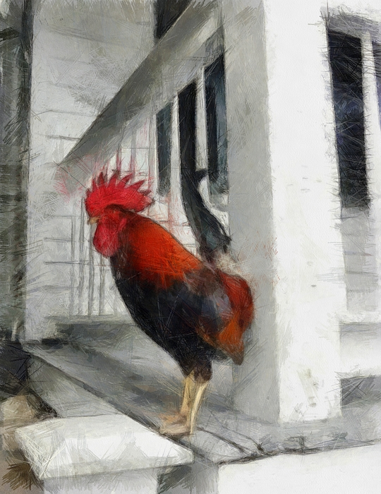 Isolated Photograph - Key West Porch Rooster by Michelle Calkins