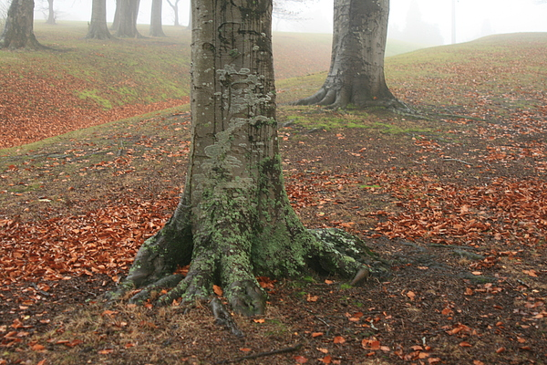 Digital Photo Photograph - Last Leaves Of Autumn by Terry Perham