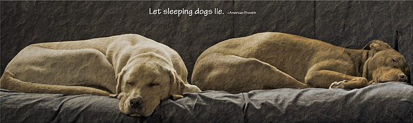 Sleeping Dogs Photograph - Let Sleeping Dogs Lie by Gwyn Newcombe