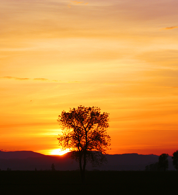Lone Tree Sunset Photograph
