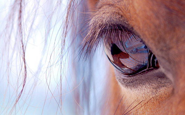 Macro Of Horse Eye Photograph