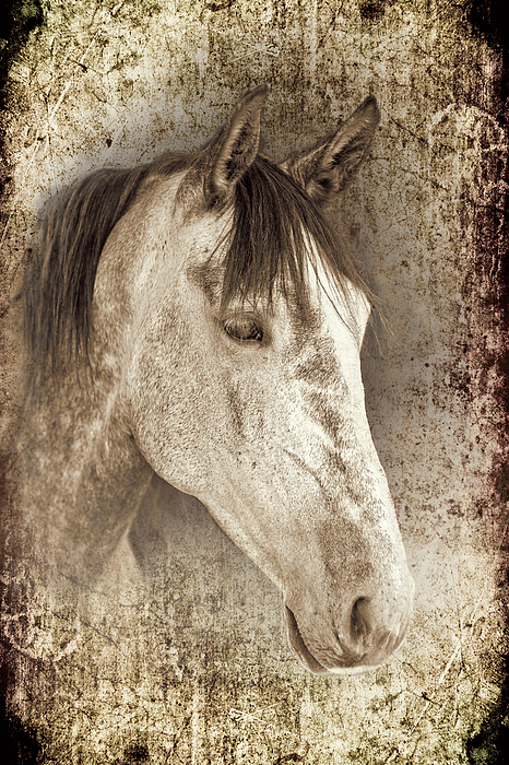 Horse Photograph - Meet The Andalucian by Meirion Matthias