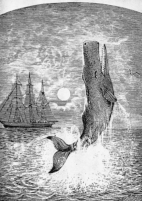 19th Century Photograph - Melville: Moby Dick by Granger