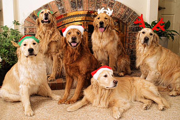 Dog.dogs Photograph - Merry Christmas by Lawrence Christopher