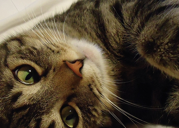 Cat Photograph - Mom Likes Me Best by Leslie Manley
