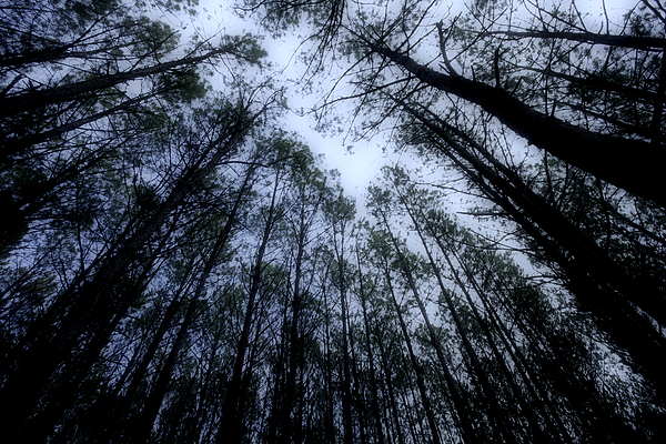 Forest Photograph - Moonlite Forest by M K  Miller
