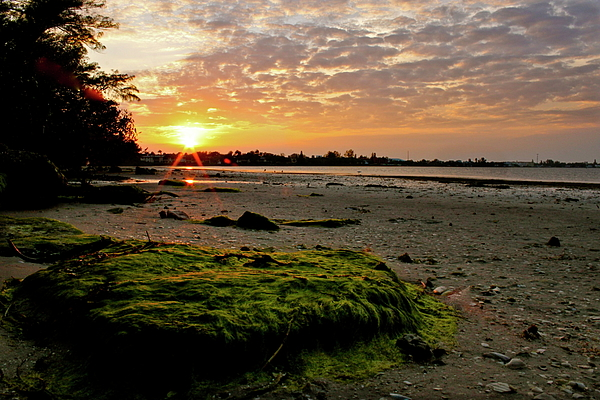 Sun Photograph - Moss On The Beach by Angie Wingerd