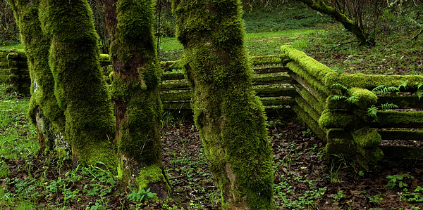 Moss Photograph - Mossy Fence by Bob Christopher