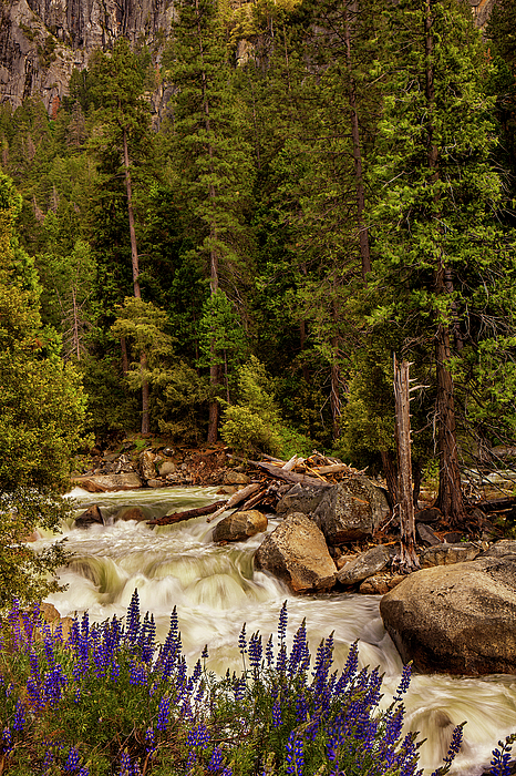 River Photograph - Mountain Stream by Andrew Soundarajan