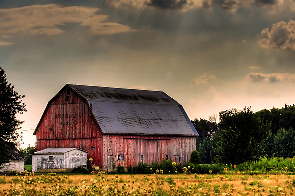 Ontario Barn In The Sun Print by Tim Wilson