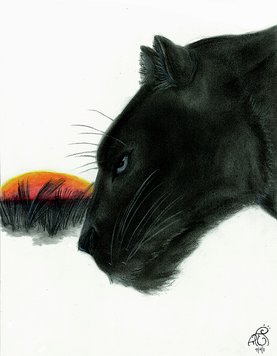 Panther Drawing - Panther At Dusk by Tiphanie Erickson