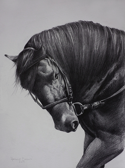 Paso Fino Drawing - Paso Fino by Harvie Brown