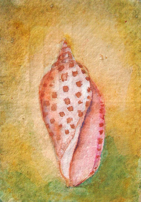 Junonia Painting - Pastel Junonia Volute Shell by Phyllis OShields