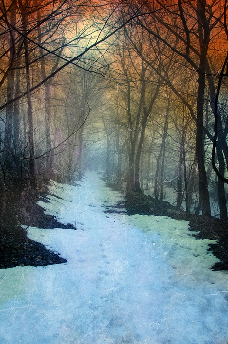 Path Photograph - Path Through The Woods In Winter At Sunset by Jill Battaglia