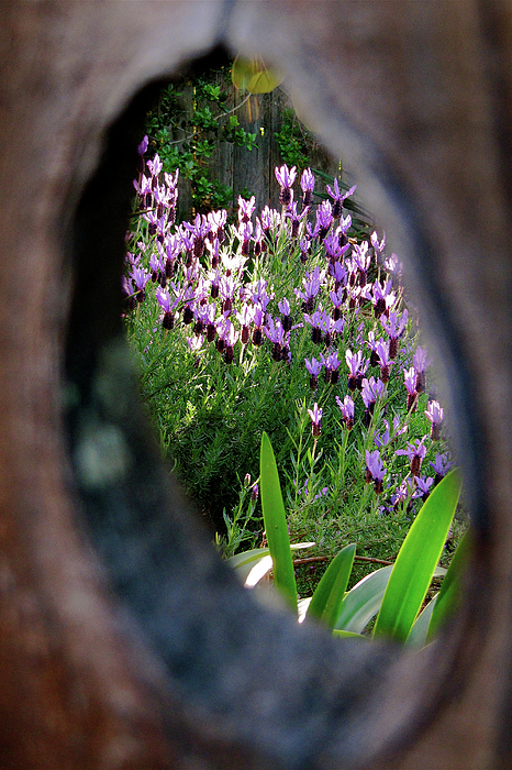 Peephole Garden Print by CML Brown
